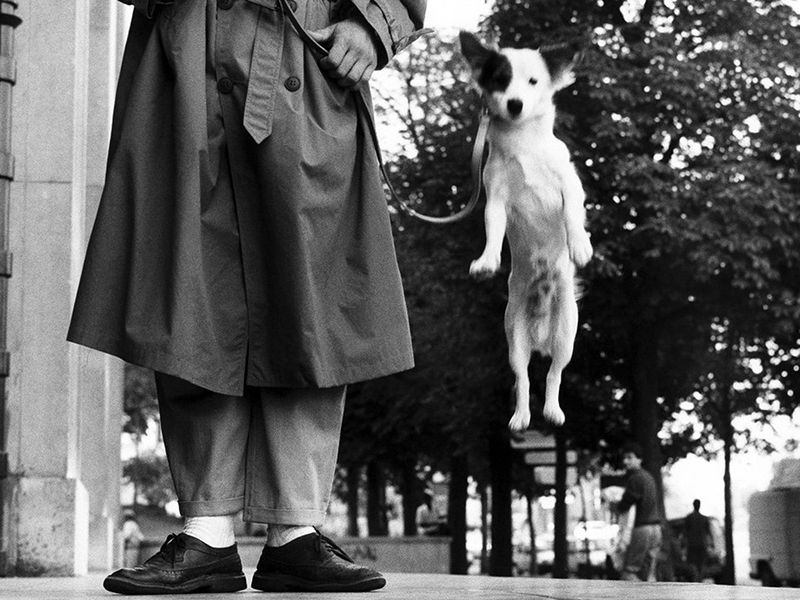 Paris, France, Dog Jumping