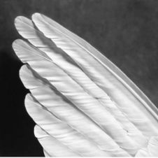 Untitled (Angel Wings)