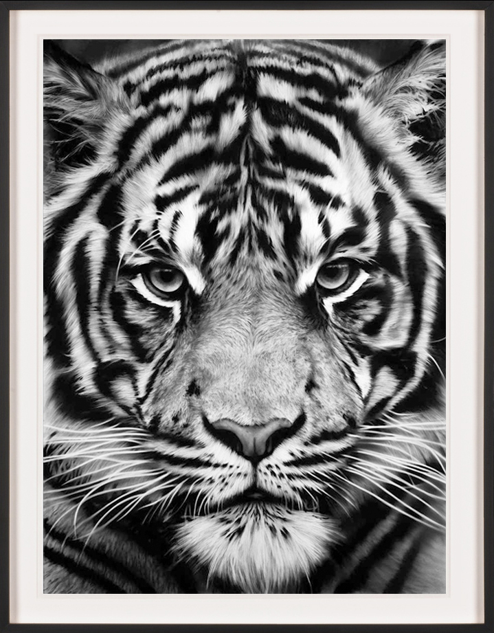 black and white tiger print wallpaper