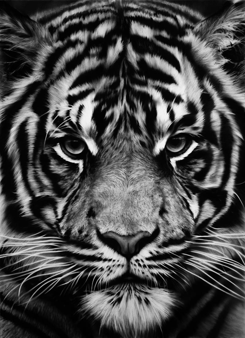 robert longo print untitled tiger. Black Bedroom Furniture Sets. Home Design Ideas